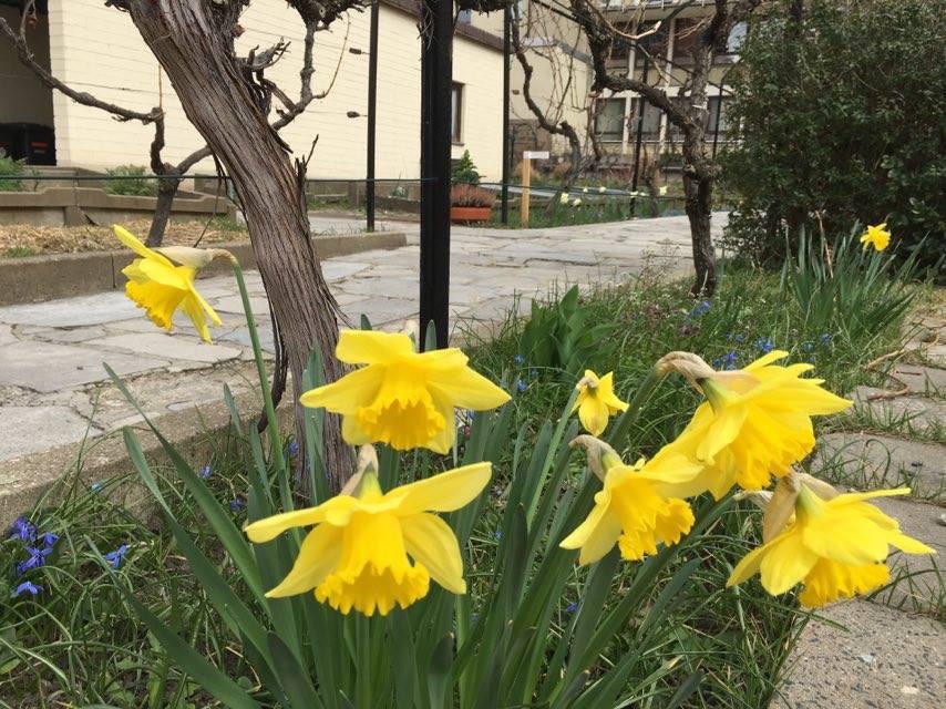 Langsam wird es in den Gärten wieder bunt. - Foto: SWity