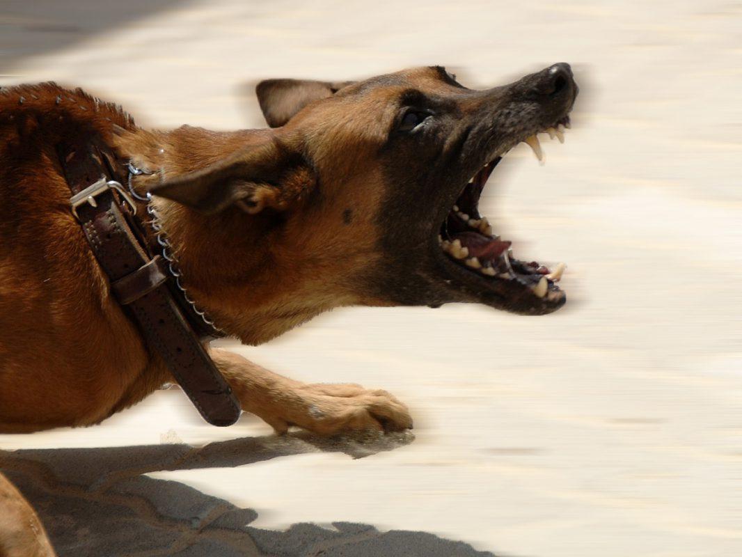 Aggressiver Hund. Symbolfoto: pixabay
