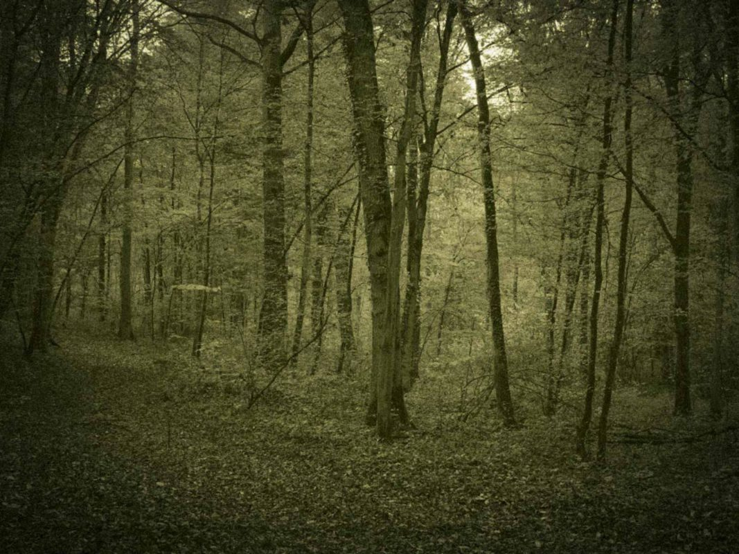 Symbolbild Schweinfurt Wald. - Foto: Dominik Ziegler