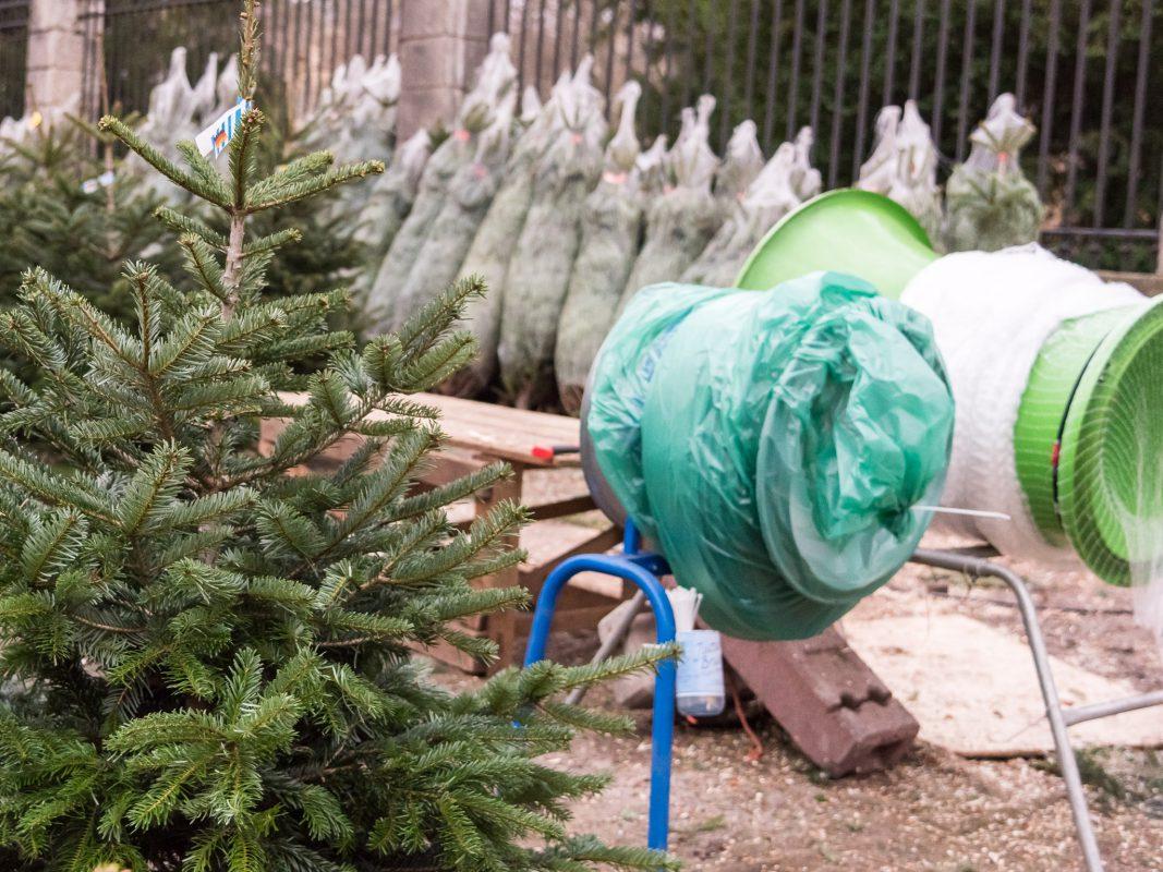 Weihnachtsbaum Herkunft.Der Weihnachtsbaum Und Seine Vier Steuersätze Schweinfurt City