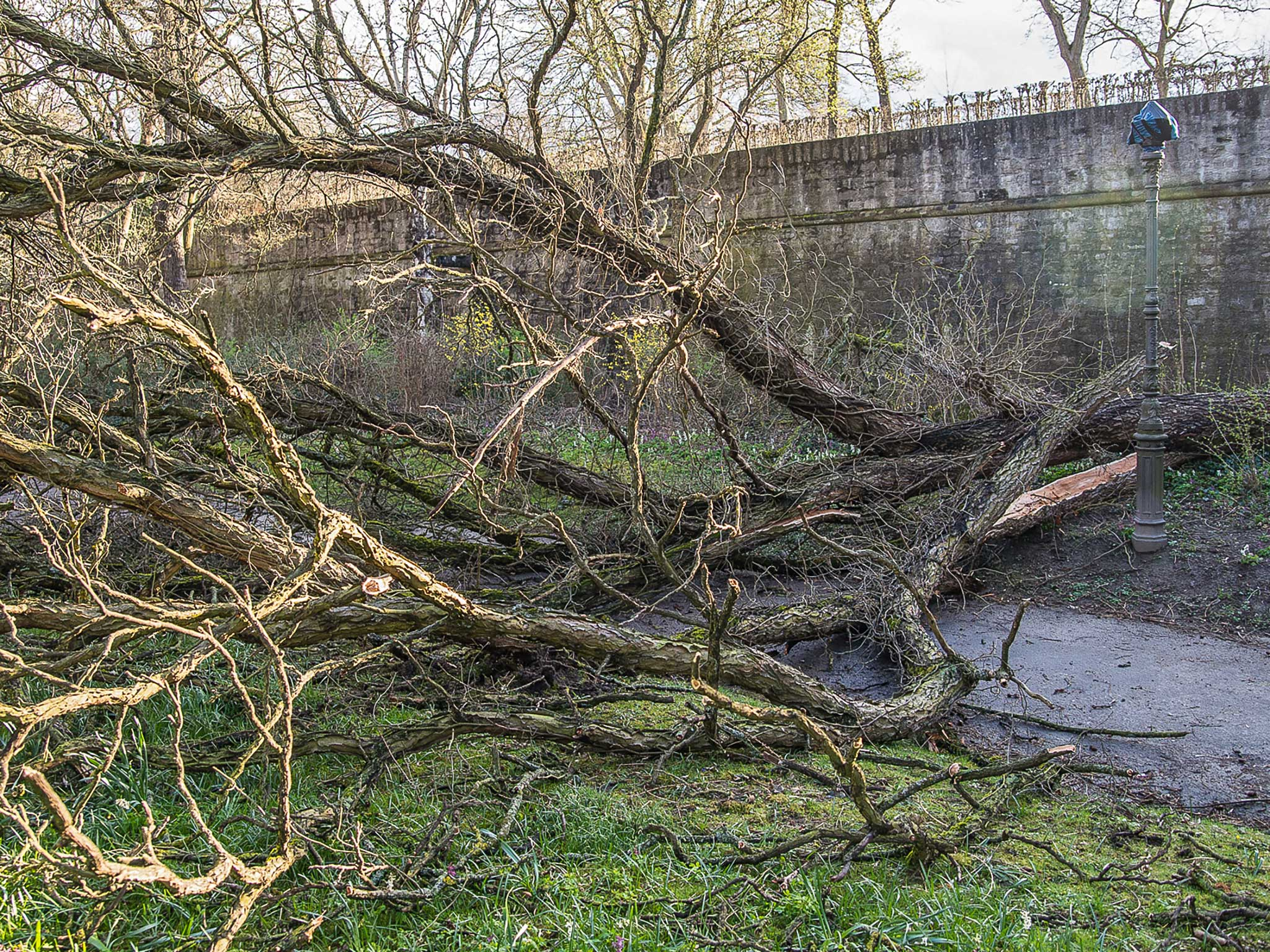 Baum. Foto: Pascal Höfig
