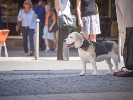 Hund im Sommer. Foto: Pascal Höfig