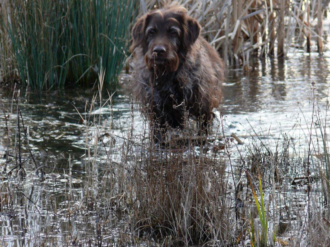 Hund im Wasser Foto: Lena Müller