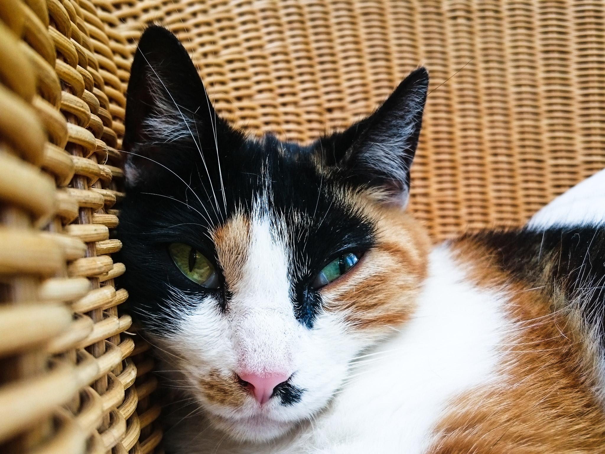 Symbolfoto Katze. Foto: Inka