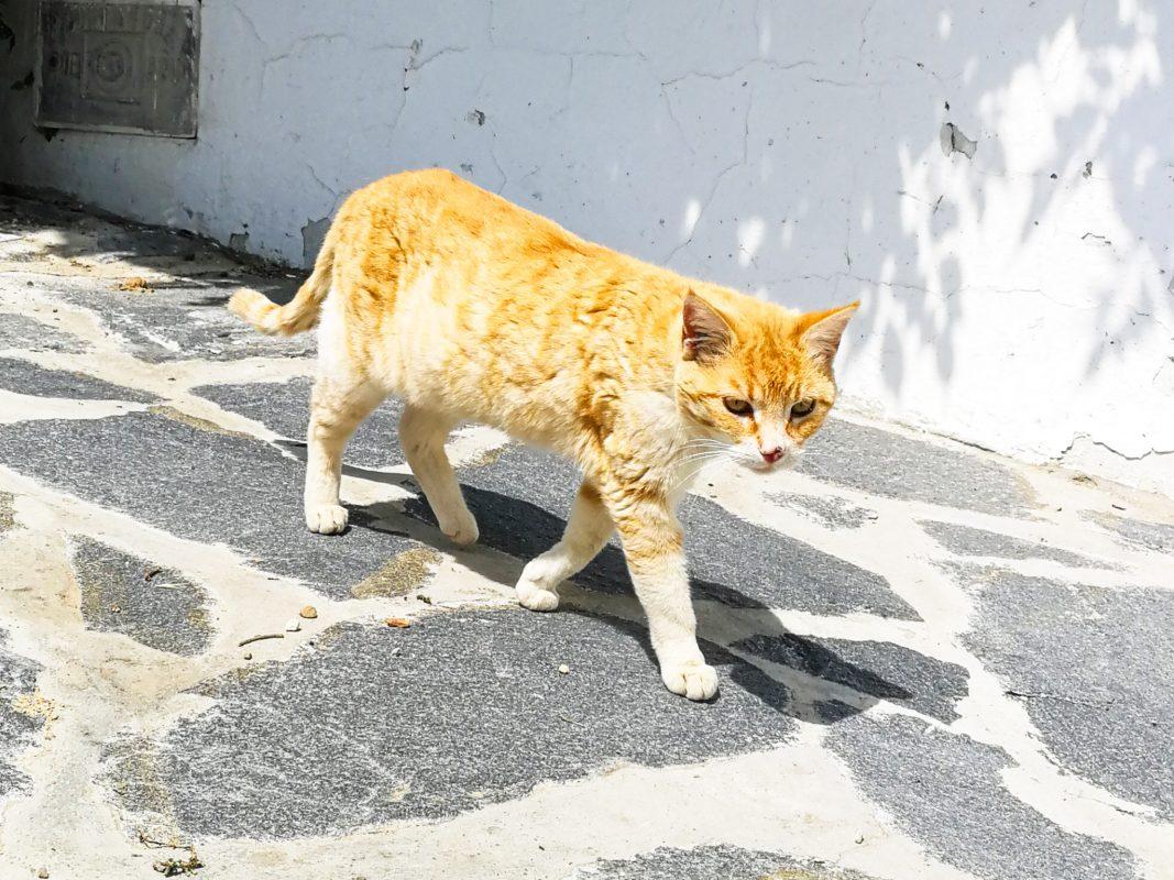 Katze. Symbolfoto: Pascal Höfig