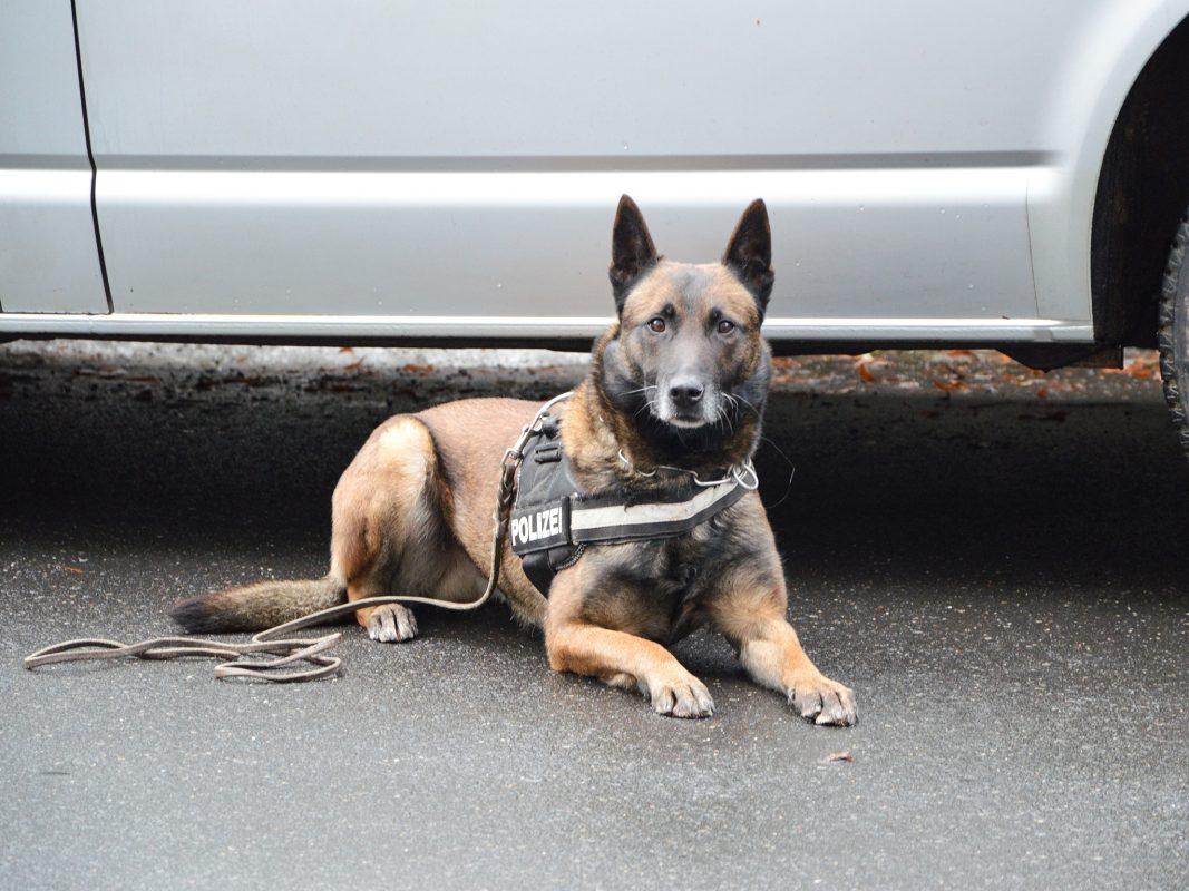 Ein Polizeihund der Würzburger Diensthundestaffel. Foto: Polizei Unterfranken