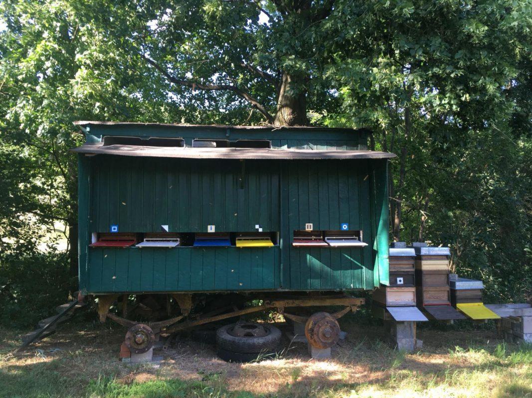 Der Bienenwaben eines Imkers. Foto: Lara Engelmann
