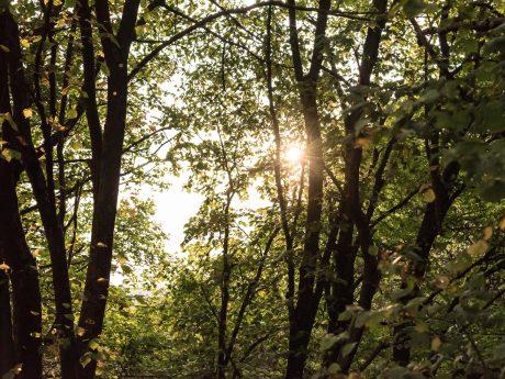 Symbolbild Wald. Foto: Pascal Höfig
