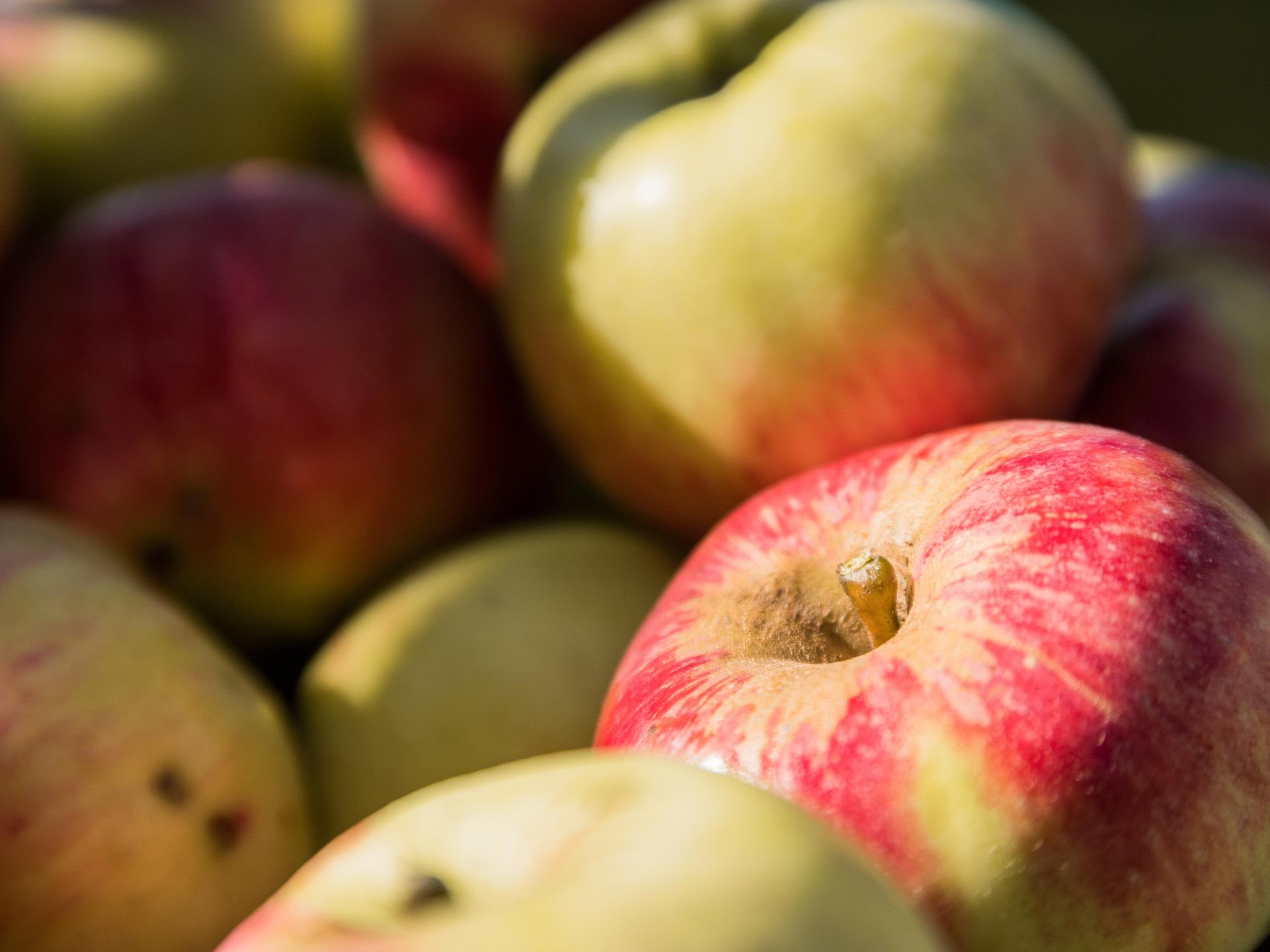 Äpfel vom eigenen Acker. Foto: Fabian Maier.