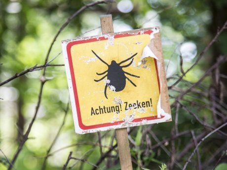 Schild in einem Wald, warnt vor Zecken. Foto: © AOK-Mediendienst
