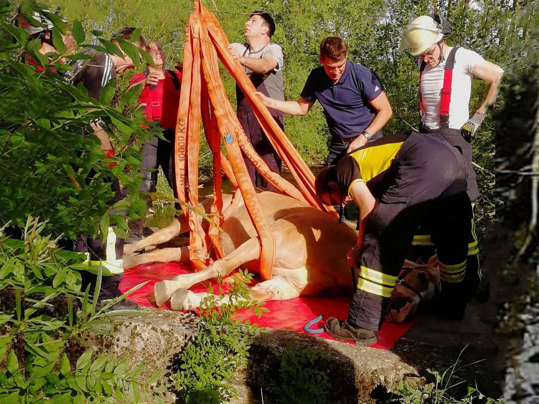 Das Pferd brach mit den Hinterbeinen durch die Bolen einer Holzbrücke. Foto: Feuerwehr Mellrichstadt