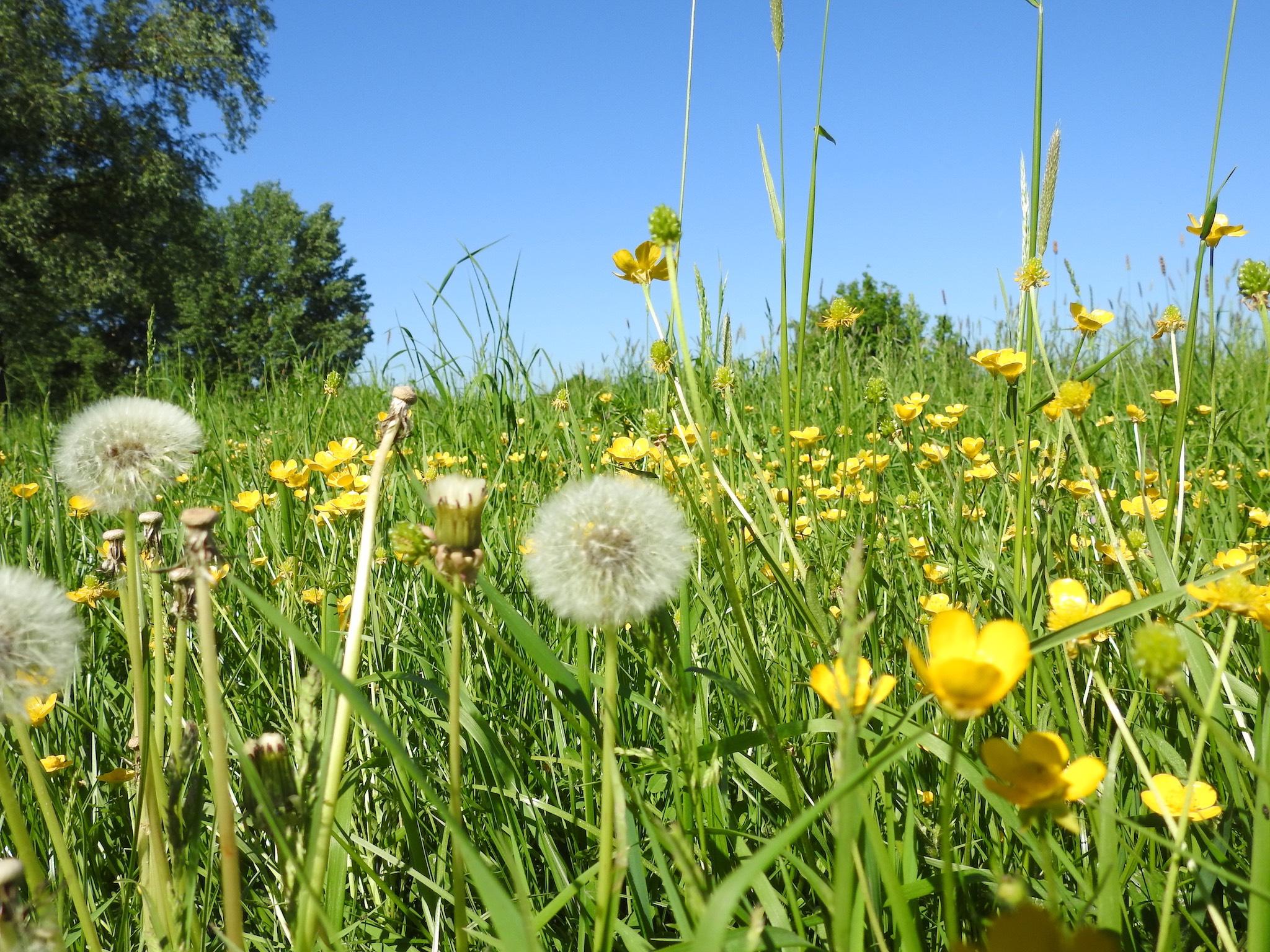Symbolbild Blumenwiese. Foto: Dirk Flieger