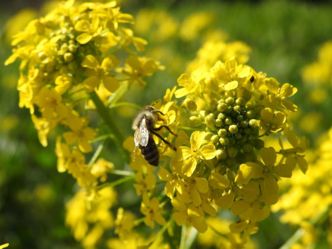 Symbolbild blühende Pflanzen. Foto: Dirk Flieger