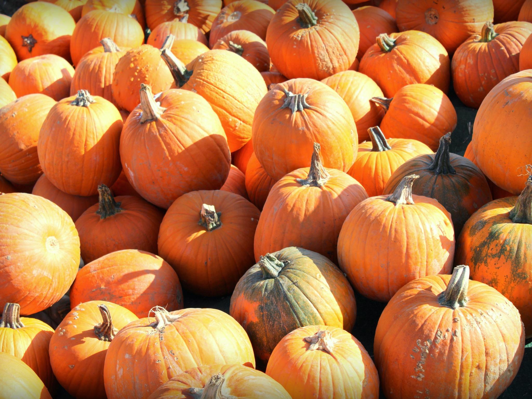 Kürbis im Herbst. Foto: Jessica Hänse