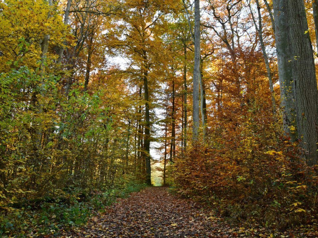 Wald im Herbst. Foto: Katharina Kraus