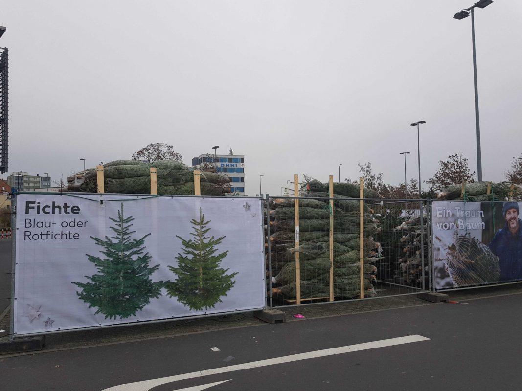 Weihnachtsbaumverkauf bei Kaufland in Schweinfurt. Foto: Dirk Flieger.