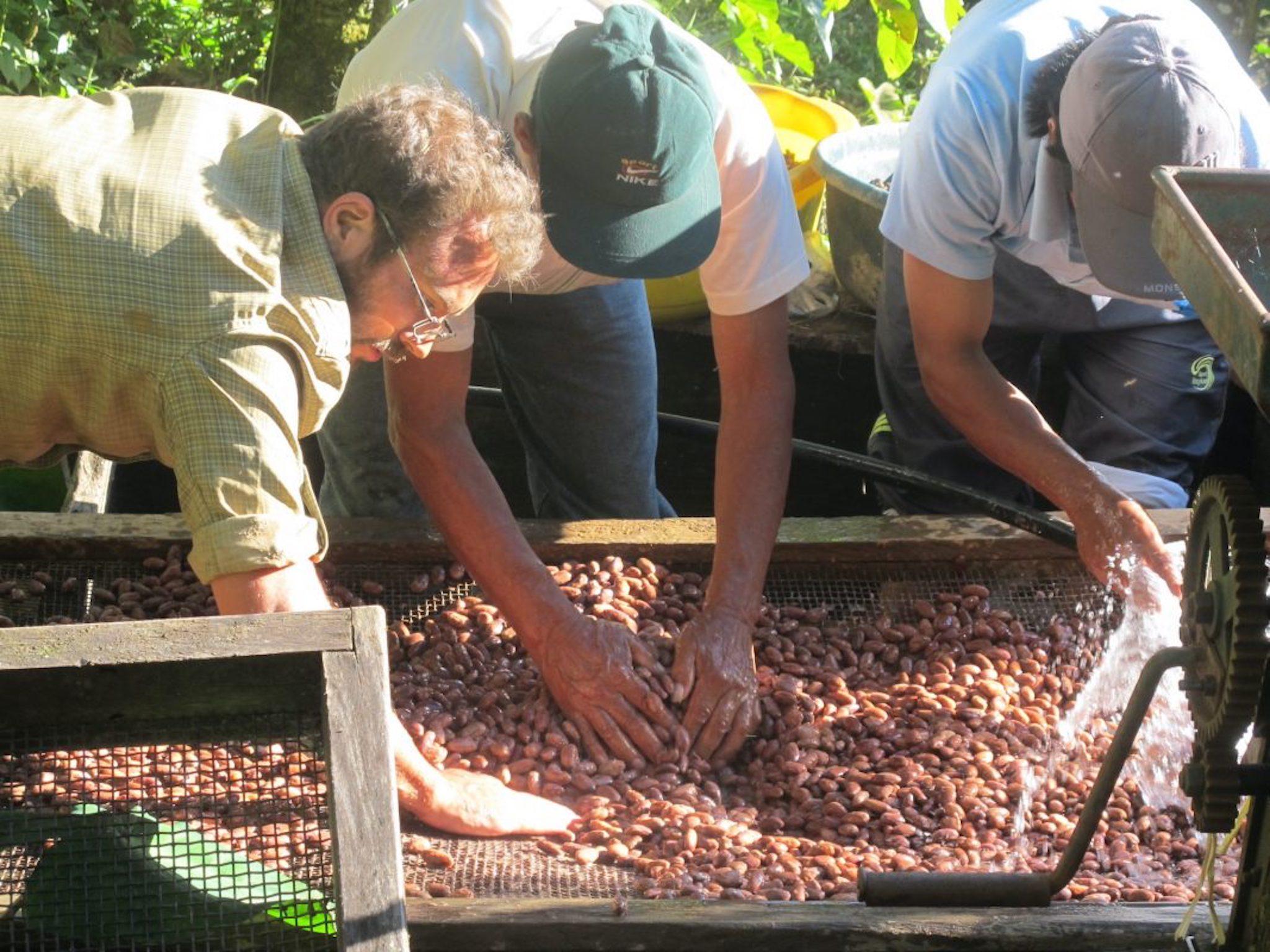 Nach der Ernte werden die Kakaobohnen sorgfältig gewaschen. Foto: PERÚ PORO GmbH