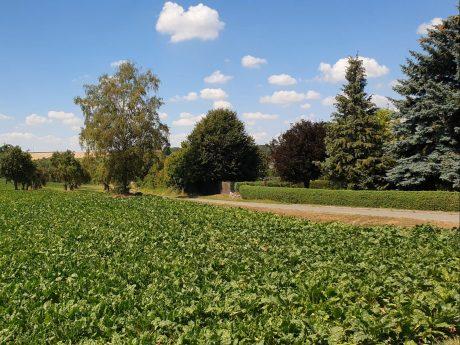 Zwei Minuten ins Grüne: Die Felder der landwirtschaftlichen Betriebe schließen direkt an Rottenbauer an. Foto: Lilli Müller